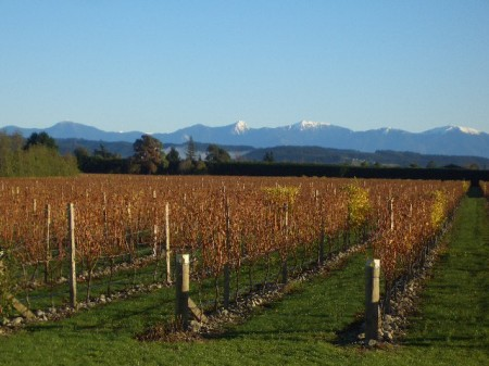 Milcrest Estate and Western ranges.JPG